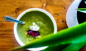 Raw food recipes dinners desserts breakfast snacks gut loving zucchini turmeric soup forumfinder Images